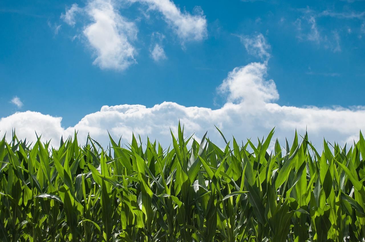 Maszyny rolnicze różnych zastosowań