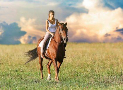 Hale do ujeżdżania koni